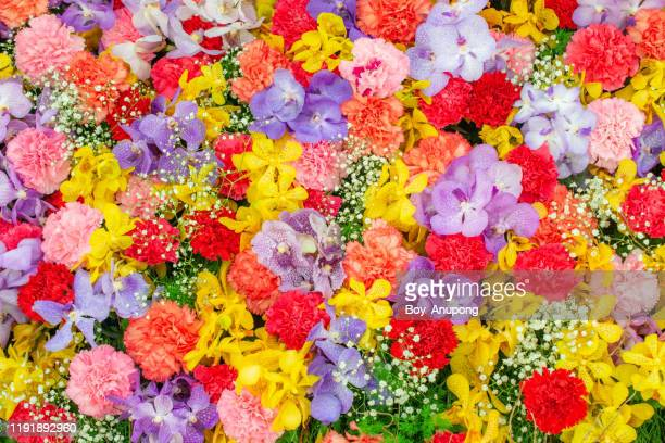 abstract background with bunches of different varieties of colourful flowers. - 束 ストックフォトと画像