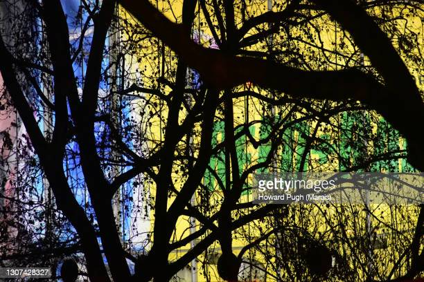 abstract backgrounds. natural. studio - howard pugh stock pictures, royalty-free photos & images