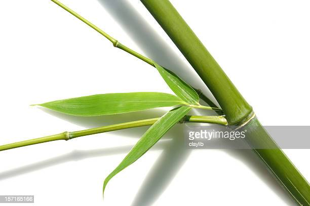 abstract bamboo 2, isolated