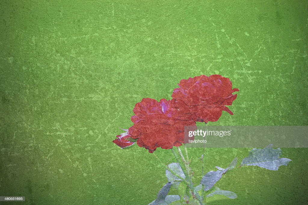 Abstrato Bonito rose imagem : Foto de stock