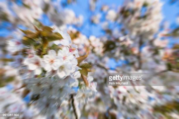 abstract blossom - equinoccio de primavera fotografías e imágenes de stock