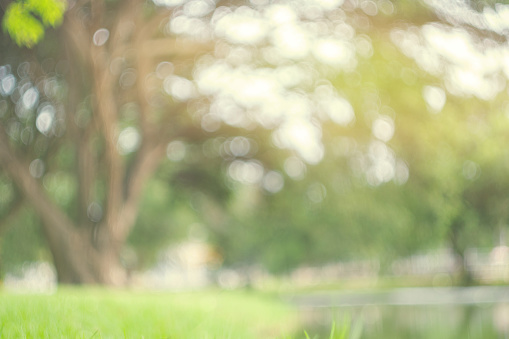 Abstract blur green park in spring outdoor background concept for blurry beautiful nature field, horizon autumn meadow scene, eco environment day in summer blossom. 1156172029
