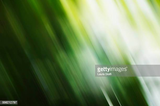 Abstract blurred sight on plants in woods