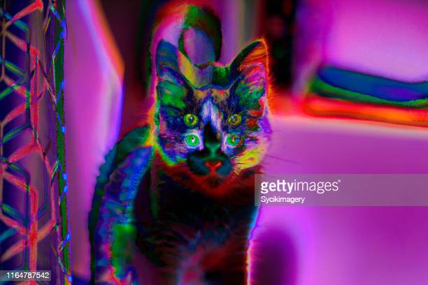 abstract cat art / design - psychedelic stock pictures, royalty-free photos & images