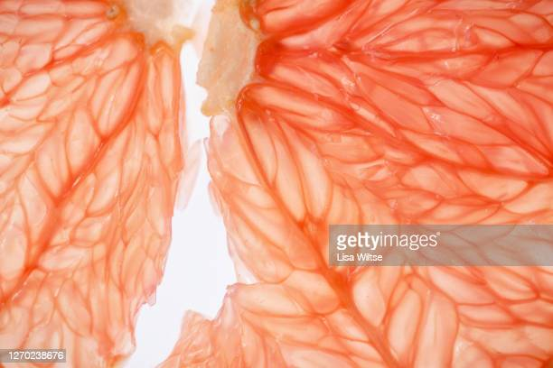 abstract composition of grapefruit backlit  on white background - lisa bitter stock-fotos und bilder