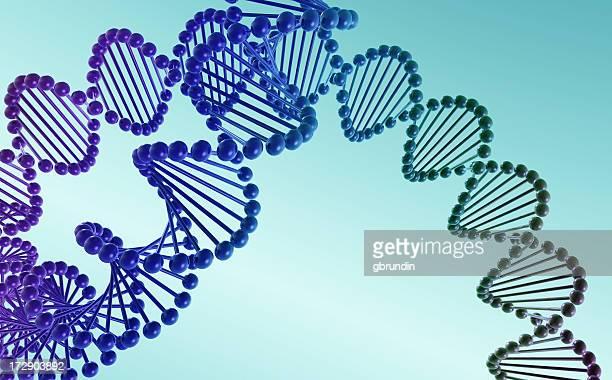 抽象の DNA