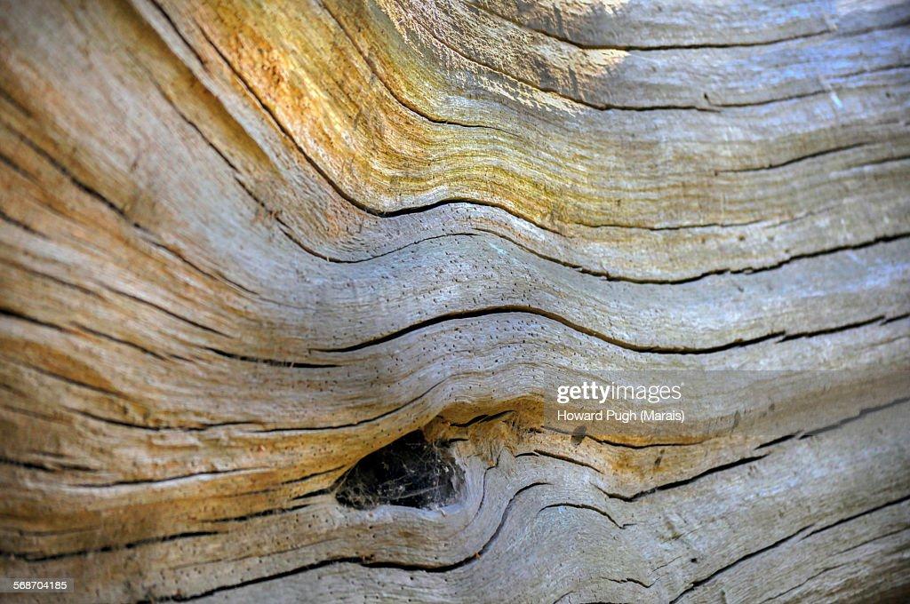 Abstract eye: : Stock Photo