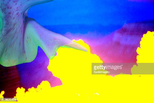 Abstract, flesh form against vividly colored background