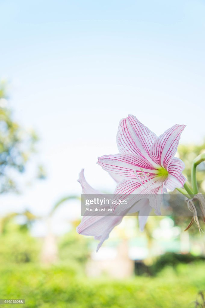 abstract flower background, flower Fresh color in morning : Foto de stock