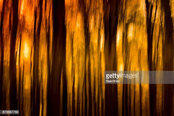 Abstract forest in sunshine
