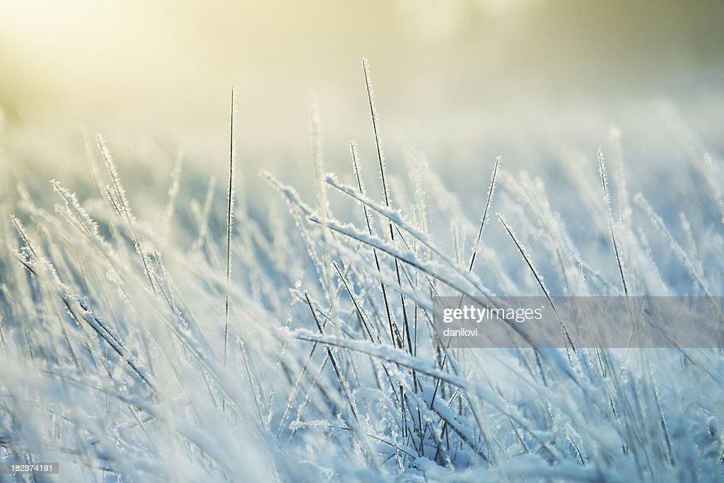 Abstract frozen grass : Stock Photo