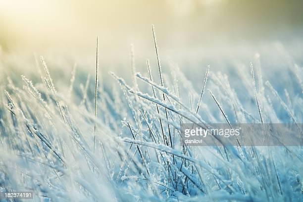 Abstract frozen grass