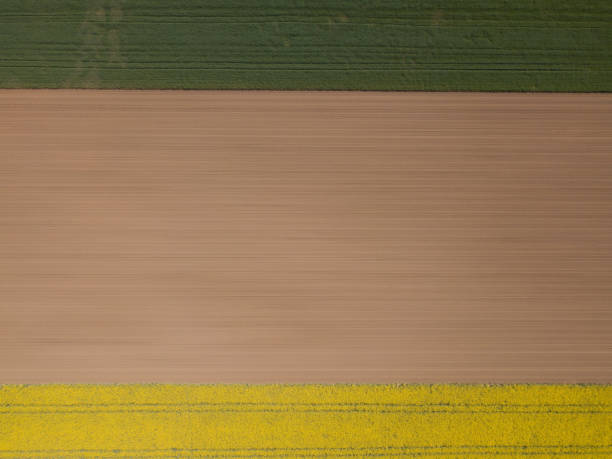 Abstract Geometric Shapes Of Agricultural Parcels Of Different Crops In Yellow