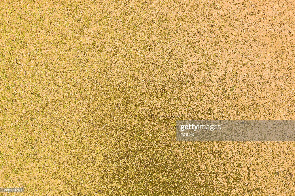 abstract gold background or glitter pink background : Stock Photo