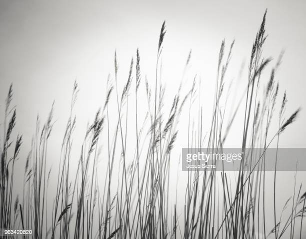 abstract grass - graspflanze stock-fotos und bilder
