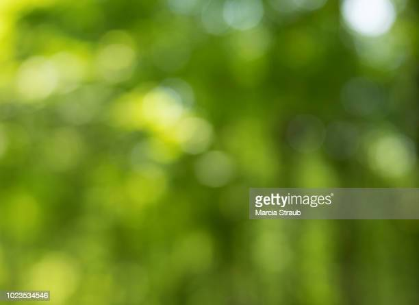 abstract green forest background - lush foliage stock pictures, royalty-free photos & images