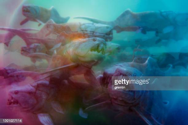 abstract group of prehistoric dunkleosteus fish - prehistoric era stock pictures, royalty-free photos & images