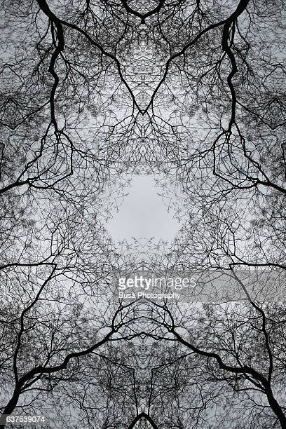 Abstract image: kaleidoscopic image of bare tree branches against an overcast, ominous sky