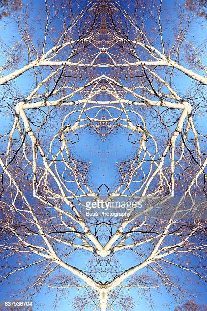 Abstract image: kaleidoscopic image of bare tree branches against the sky