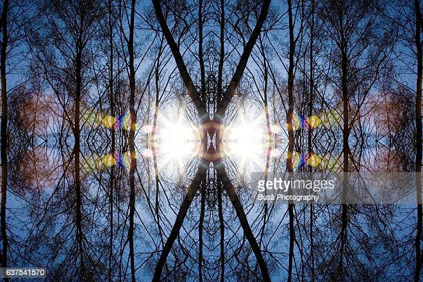 Abstract image: kaleidoscopic image of bare tree trunks and branches against the sky