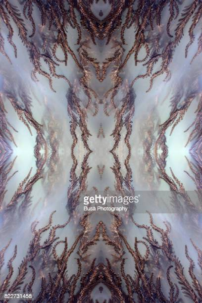 abstract image: kaleidoscopic image of brown algae in murky water in the sea. venice, italy - radial symmetry stock pictures, royalty-free photos & images