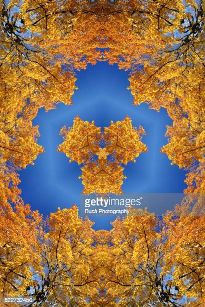 Abstract image: kaleidoscopic image of orange leaves on tree branches in Autumn