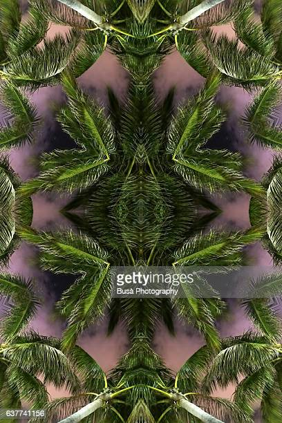 Abstract image: kaleidoscopic image of palm trees at night in Miami Beach, USA