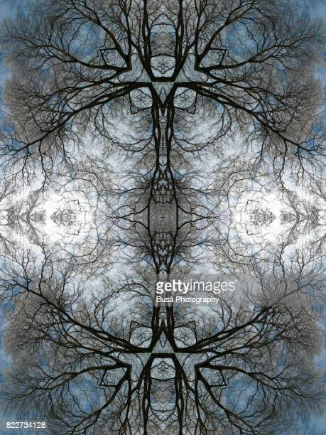 Abstract image: kaleidoscopic image of winter tree branchees against a blue sky