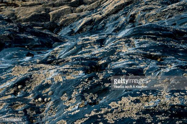 abstract image of barnacles on dark rocks - barnacle stock pictures, royalty-free photos & images