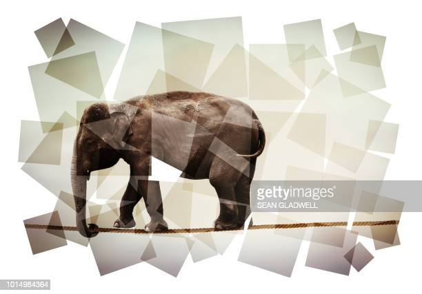 Abstract image of elephant on tightrope