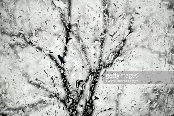 abstract image of water and trees