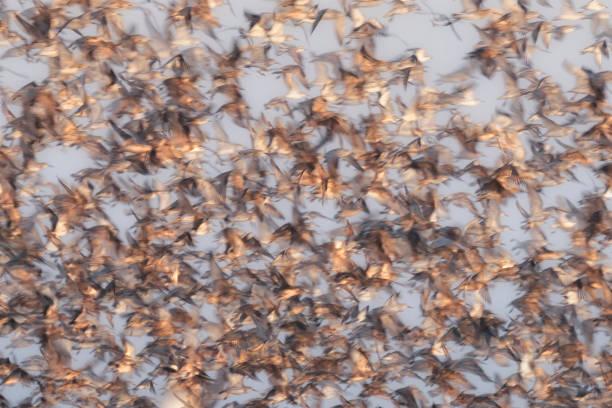 Abstract image of wild birds flocking, with motion blur