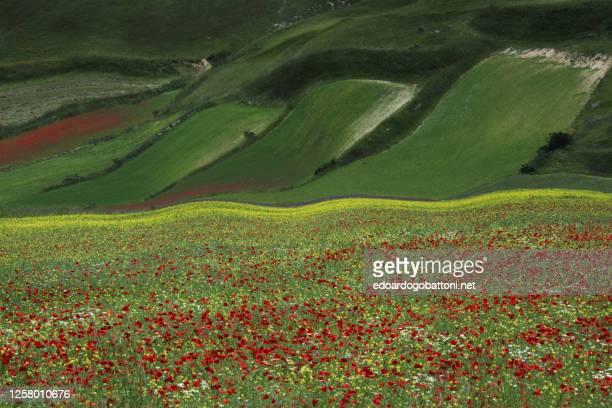 abstract landscape 31 - edoardogobattoni stock pictures, royalty-free photos & images
