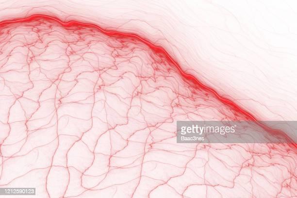 abstract line art - blood vessels - bloedvat stockfoto's en -beelden