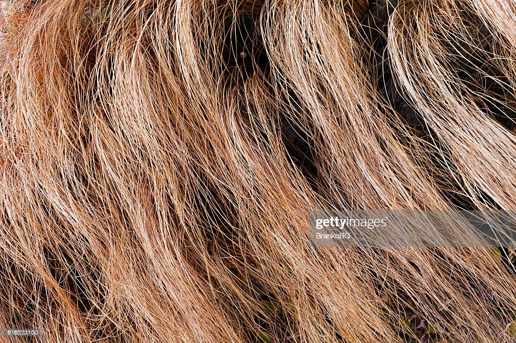 abstract long dry grass : Bildbanksbilder