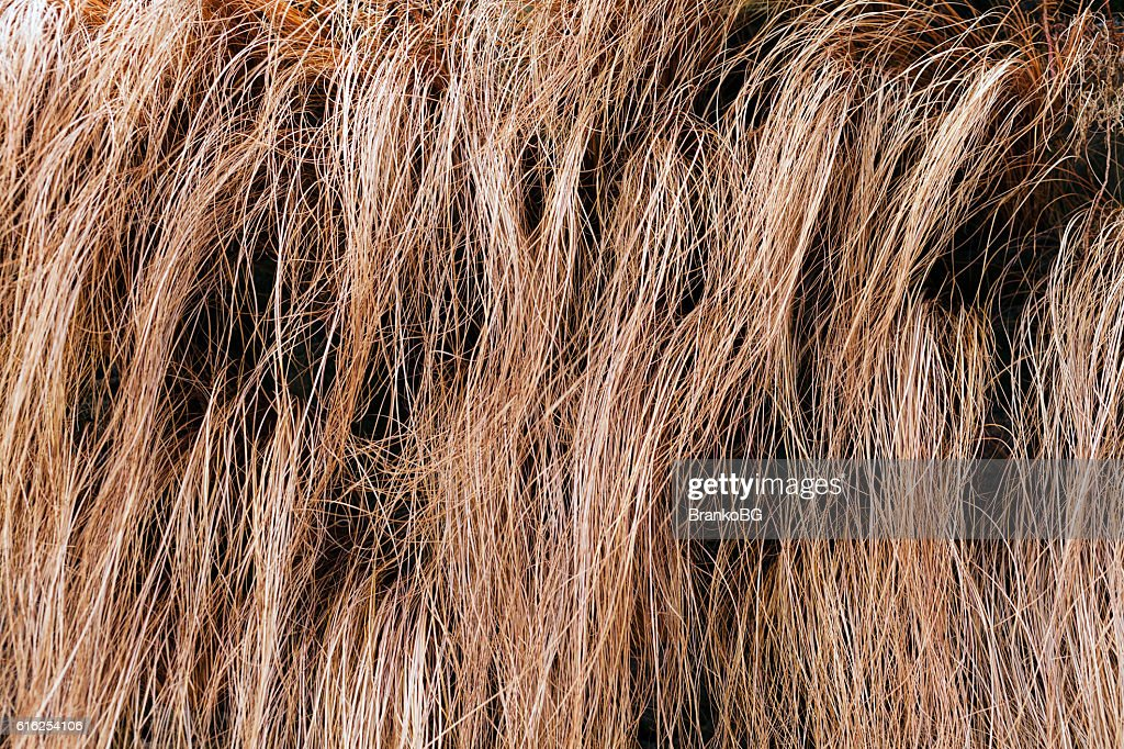 abstract long dry grass : Foto de stock