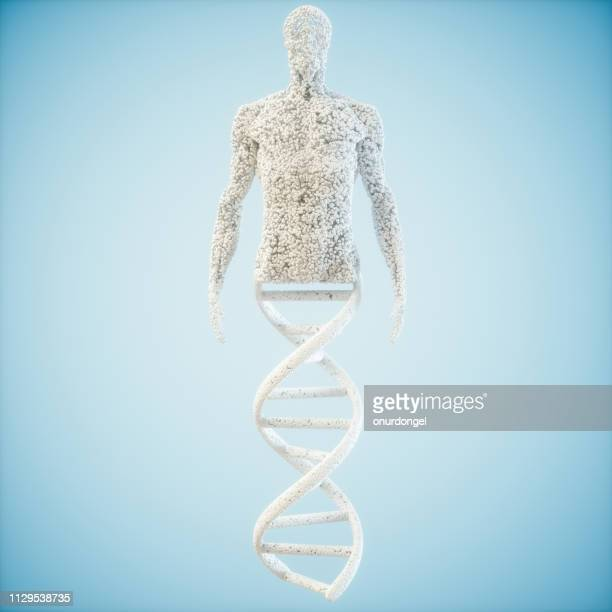 abstract model  human of dna molecule - dna stock pictures, royalty-free photos & images