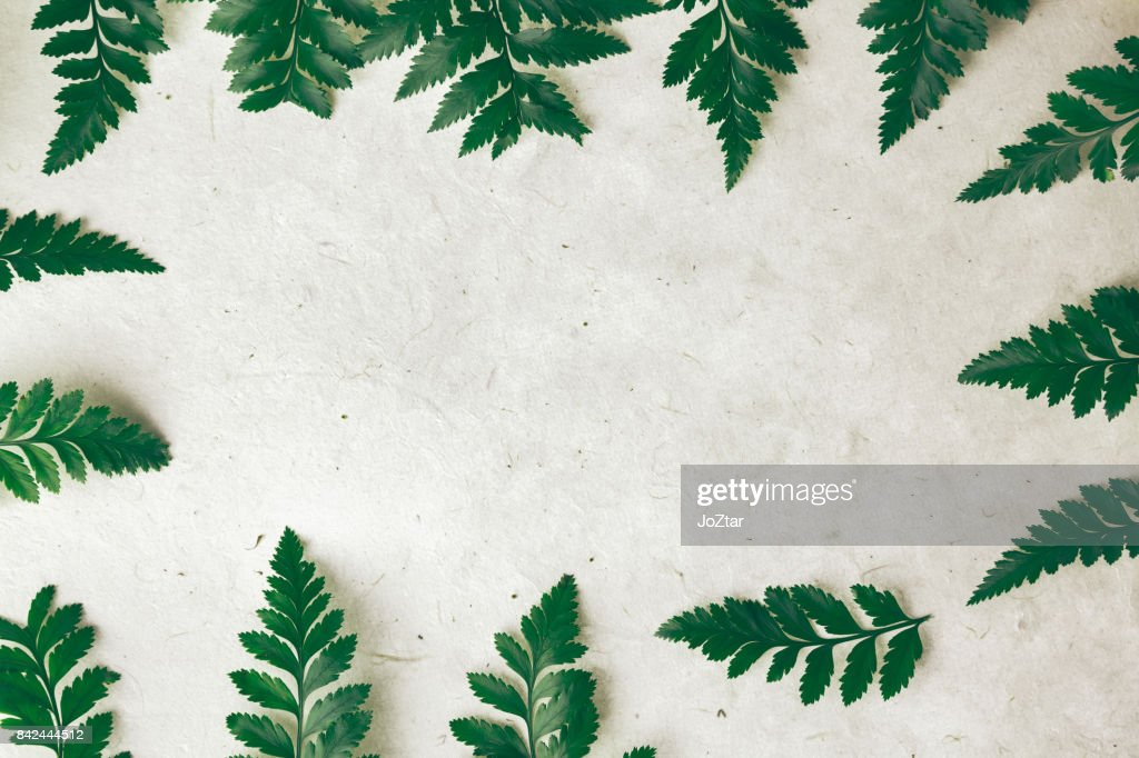 Abstract Nature Background Close Up The Leafs To Silhouette