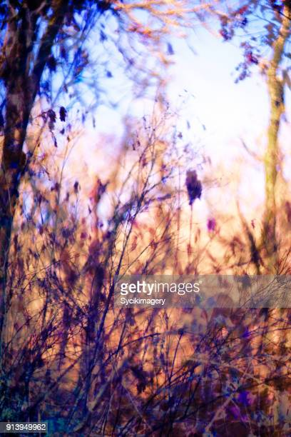 Abstract nature scene