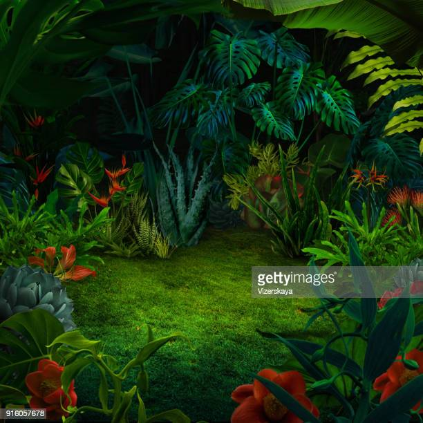 abstract night jungle background - fairy stock photos and pictures