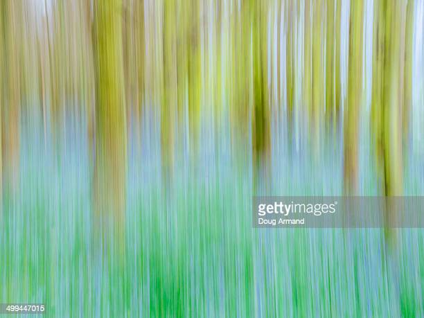 Abstract of field of bluebells