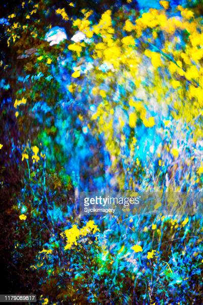 abstract painterly meadow art - impressionism stock pictures, royalty-free photos & images