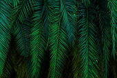 abstract palm leaf textures dark blue