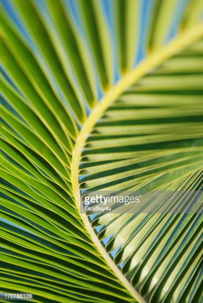 Abstract palm tree