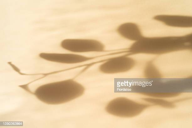 abstract paper background with shadows from plants branches of eucalyptus - shadow stock pictures, royalty-free photos & images