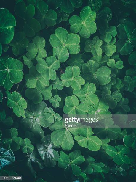 abstract pattern formed by irregular arrangement of green leaves - irregular texturizado stock pictures, royalty-free photos & images
