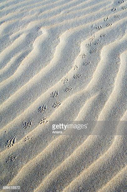 Abstract pattern of sea sand ripples formed by the wind and animal footprints in the dunes.