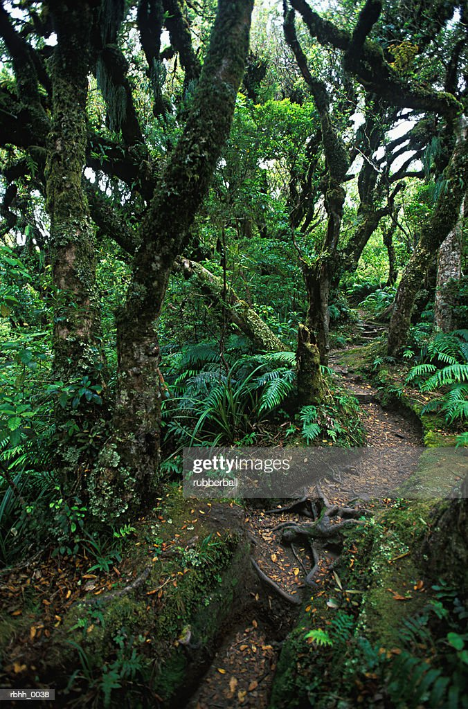 abstract photograph of a small path as it winds through lush vegetation of a rain forest : Stockfoto