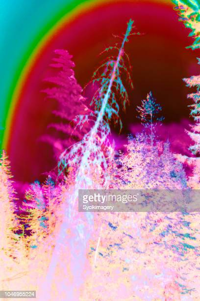 Abstract pine forest