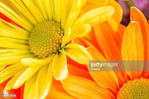 抽象スプリング Daisies 、オレンジ、イエロー